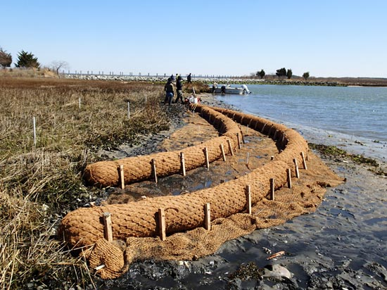 coir logs for bank stabilization