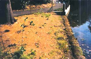 coir fiber matting for restoration