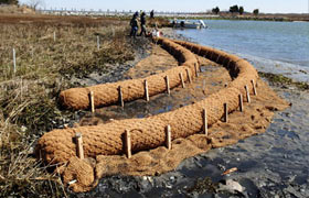 natural erosion control on the shoreline