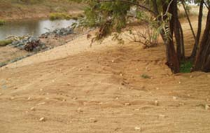 biodegradable erosion control blankets